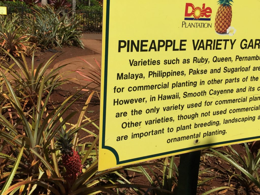 Dole Plantation, Pineapple